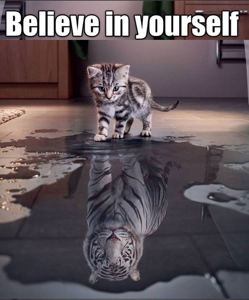 Believe Cat I believe essays : believe in yourself cat siberian tiger ...