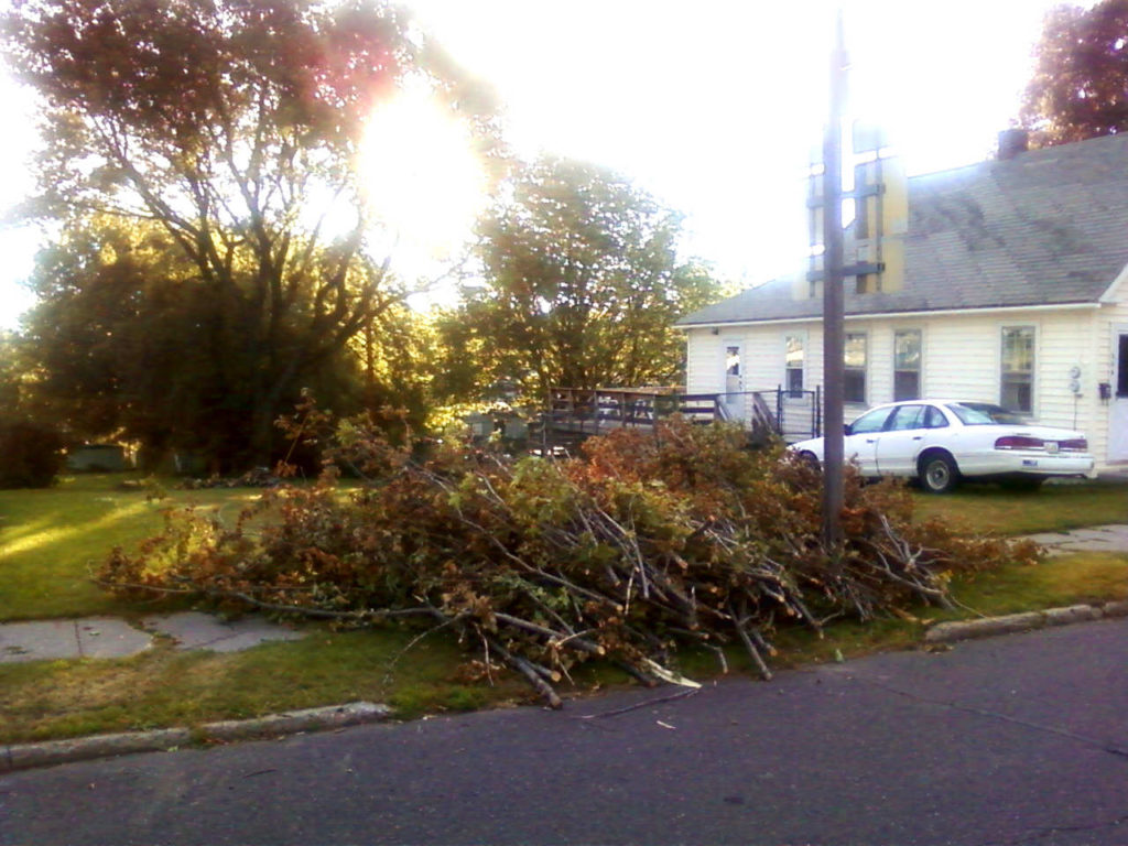 fallen-tree-branches-dragged-curbside-2
