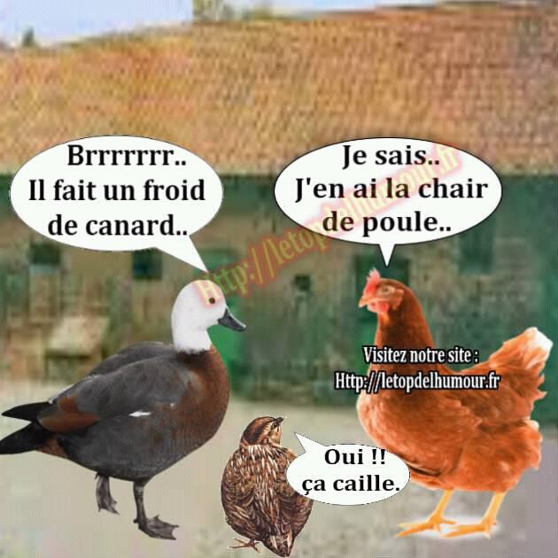 french-canard-poule-caille