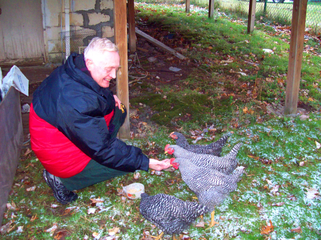 jdn-feeding-two-roosters-two-hens-nov-10-2014